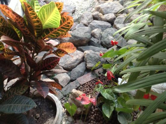 fotos de jardim florido : fotos de jardim florido:Jardim florido