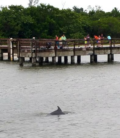 Fort Myers Princess: Dolphin spotted near pier at Sanibel