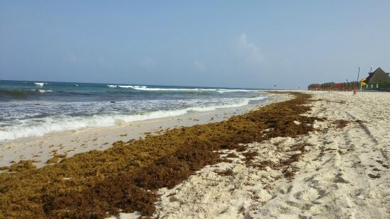 Valentin Imperial Riviera Maya The Beach