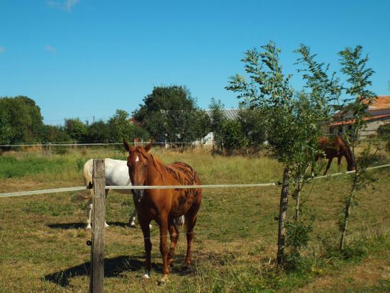 Bourg Paillé : Les chevaux dans le pré derrière les chambres d'hôtes