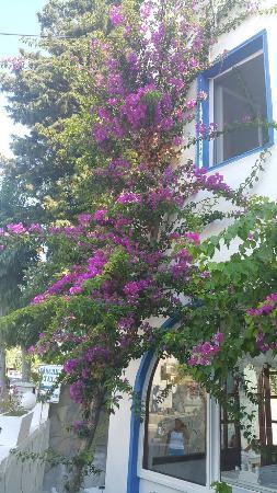 Bircan Hotel: Çiçekler