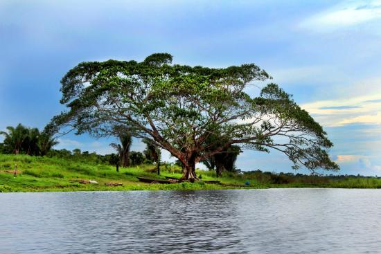 Laguna Cashibococha