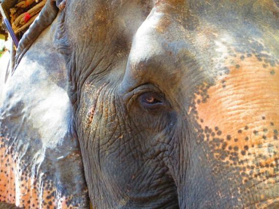 Somnuk Elephant Camp : Elephant lady