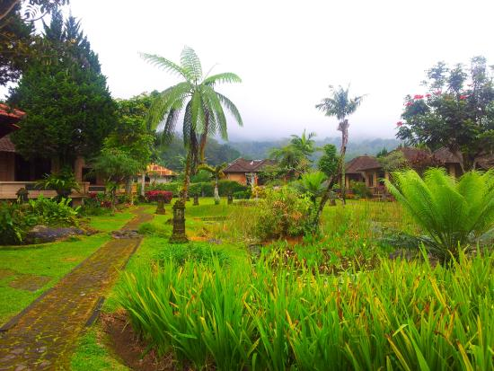 green, fertile and cool mountain air at Enjung Beji Resort, Bedugul ...