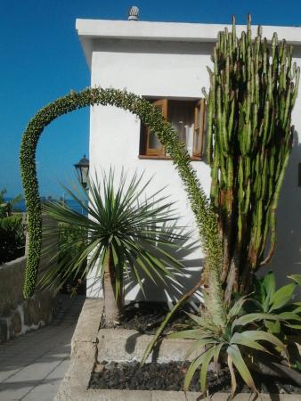 Hotel Rural El Navio: giardinetti camere