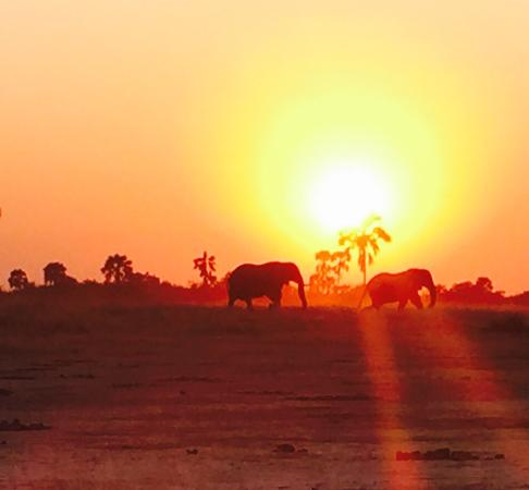 Luxury game drive experience!