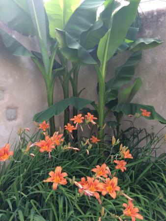 La Baguenaude : Garden in June