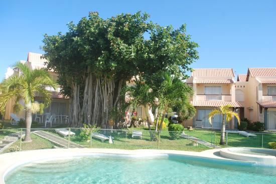 Villa Banyan : la piscine et le banyan