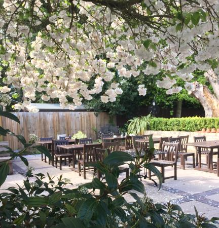 Red Lion: Our patio in bloom