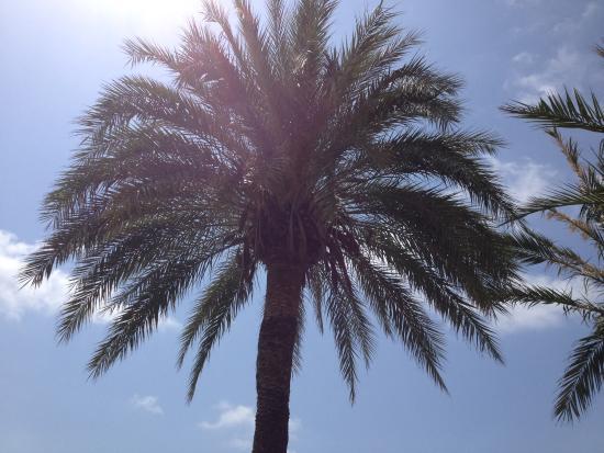 Hotel Montsouris Orleans: Allongée sur transat de la piscine..la vue..