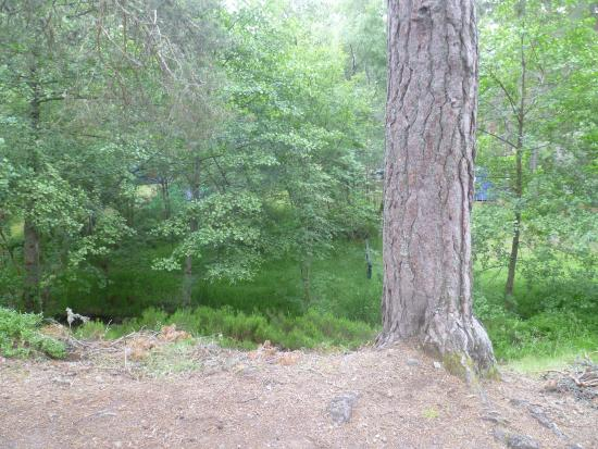 Rothiemurchus Camp and Caravan: Trees