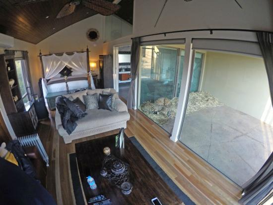 Jamala Wildlife Lodge: Living Room With Cheetah