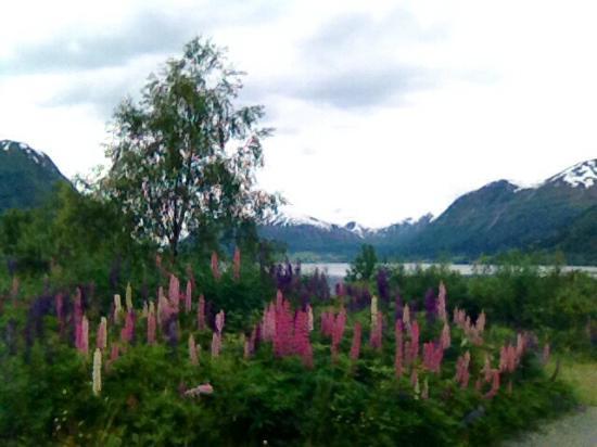 Jolster Municipality, Νορβηγία: Kjøsnesfjorden - a part of the Jølster fresh water , Skei.