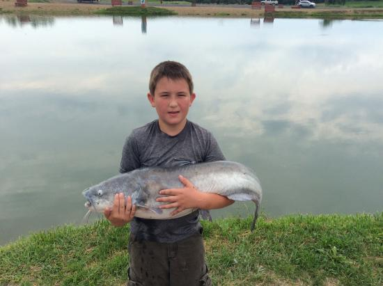 45 blue catfish picture of zetts tri state fish