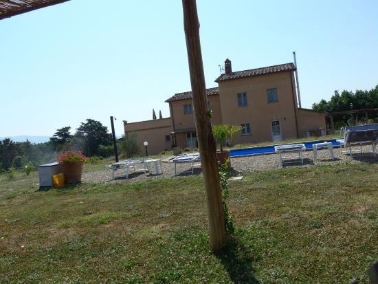 Podere le Spighe: Pool area