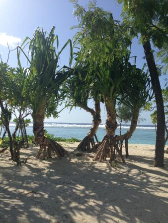 Velvet Beach: На берегу возле отеля