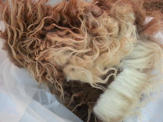 Black Cat Farmstead: Raw fleece