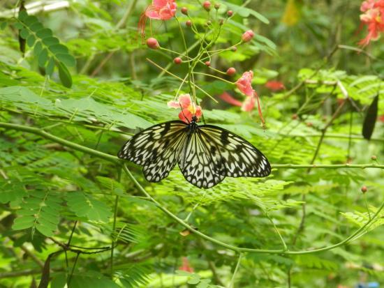 Can-olin Butterfly Sanctuary: сад бабочек