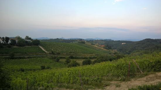 Villa Pallavicini: местность