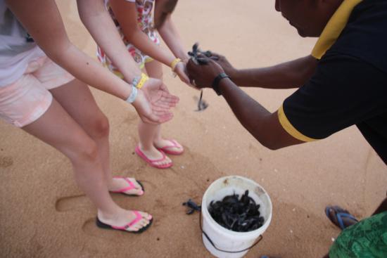 Bentota, Sri Lanka: czas na wypuszczanie żółwi