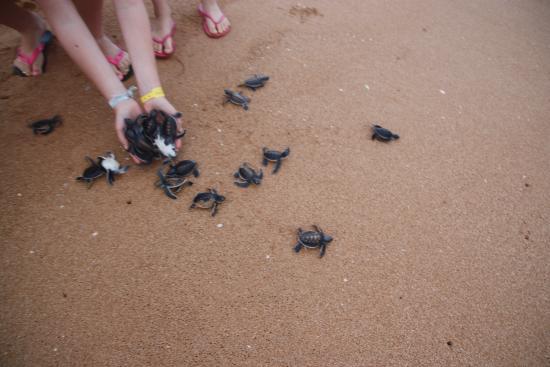 Bentota, Sri Lanka: szybko do morza...