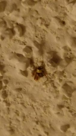 ‪ميد واي هوتل آند سويتس بروكفيلد: Dead spider found on ceiling of our room‬