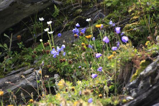 Grindelwald, Suiza: そこかしこに見られる可憐な花