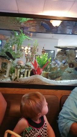 JJ's Little Bay Cafe: Baby loved the fishies.