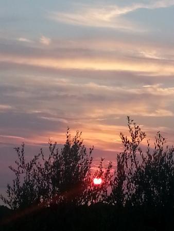 Albergo 2 Pini: tramonto tra gli ulivi..vista dalla nostra camera! un incanto