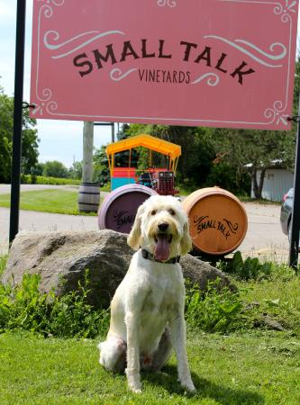 Small Talk Vineyards: Dog friendly!