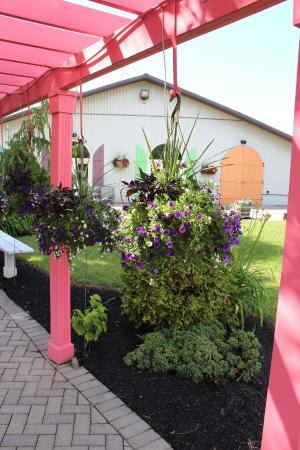 Small Talk Vineyards: Beautiful gardens out front