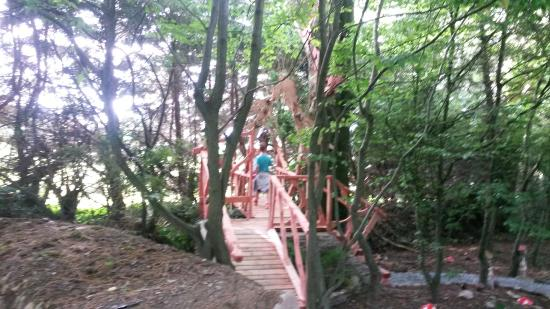 Kilmokea Gardens: A forest adventure!