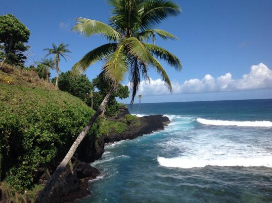Seabreeze Resort Restaurant: Beneath the swaying palm trees