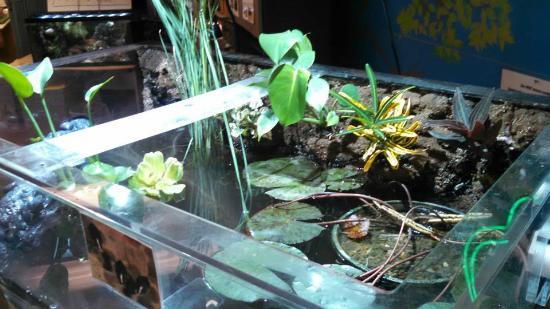 Grand Junction, CO: Freshwater Aquarium