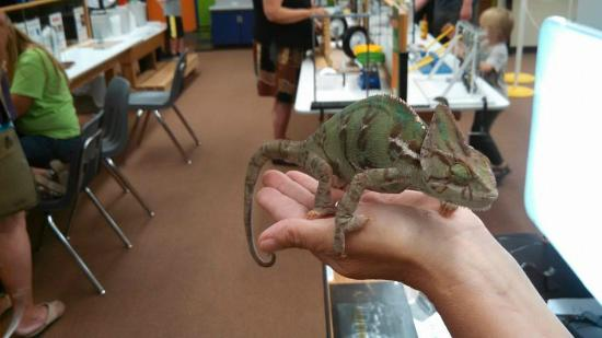 Grand Junction, CO: Bobby the Chameleon