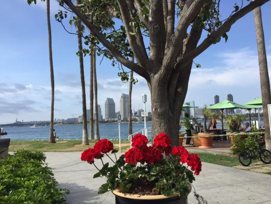 Spiro's Gyros Greek Restaurant: View from patio of San Diego