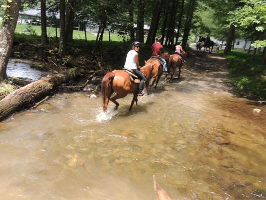 ‪Cades Cove Riding Stables‬