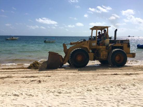 Dreams Palm Beach Punta Cana Front End Loader Removing Seaweed