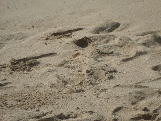 Jamaica Grande Beach : siri