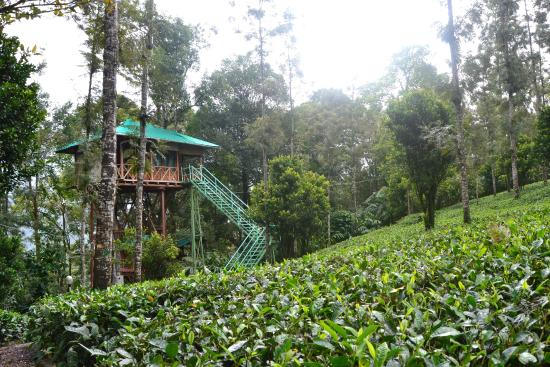 Tree House And Tea Plantation Picture Of Dream Catcher