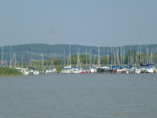 Αυστρία: Berlayar di Neusiedl See
