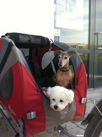 Holland Bikes : Ballades avec nos deux petites chiennes pendant toutes les vacances sur l'Ile de Ré