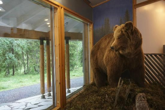 Oulanka National Park, Finlandia: A bear in the visitor center