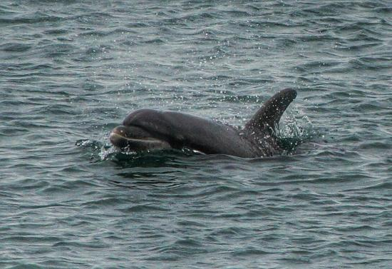 Nant Y Croi Farmhouse: Good chance of seeing the dolphins, too