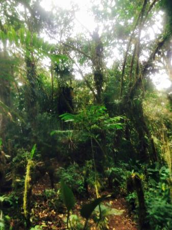 Santa Lucia Cloud Forest : In the forest
