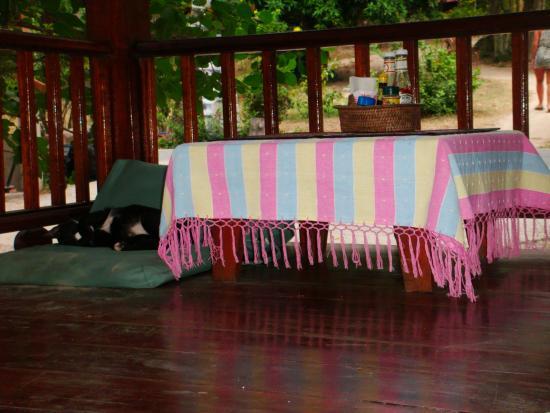 Pranee's Kitchen: Кот в ожидании посетителей.