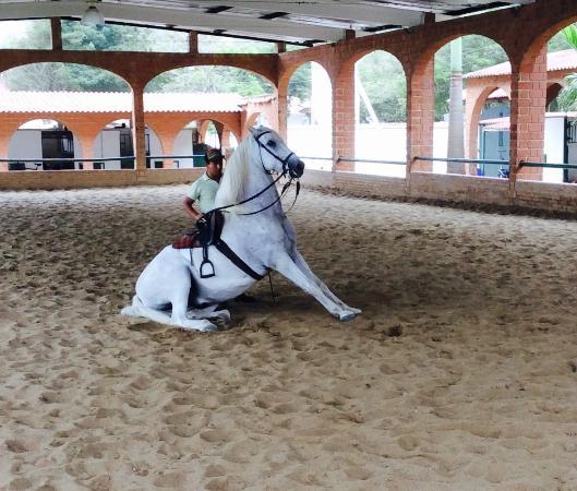 Villa de Los Suenos: stunning horse