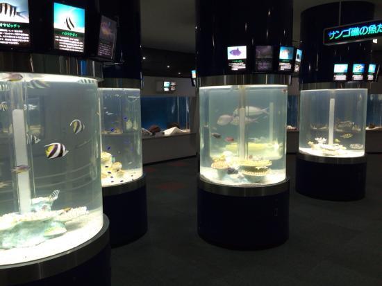 Sunpiazza Aquarium