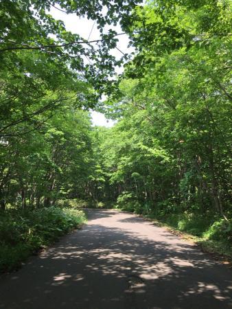 Nopporo Forest Park: photo1.jpg