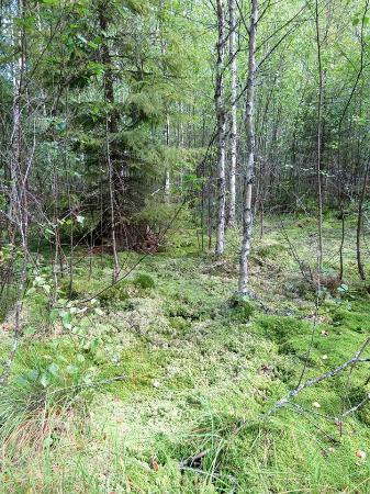 Pokaini Forest